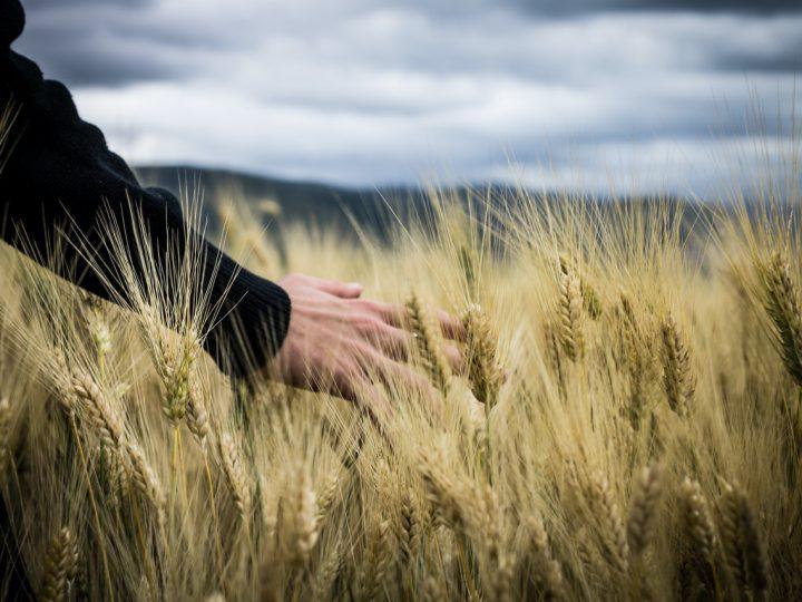 INPS: ESONERO CONTRIBUTIVO IMPRENDITORI AGRICOLI E COLTIVATORI