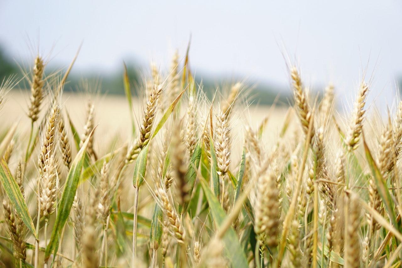 BIOLOGICO: SI PUNTA AL GREEN DEAL